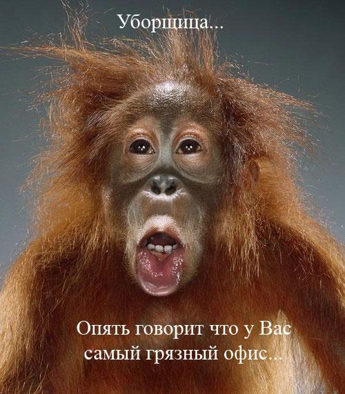 Происхождение человека (14 фото)